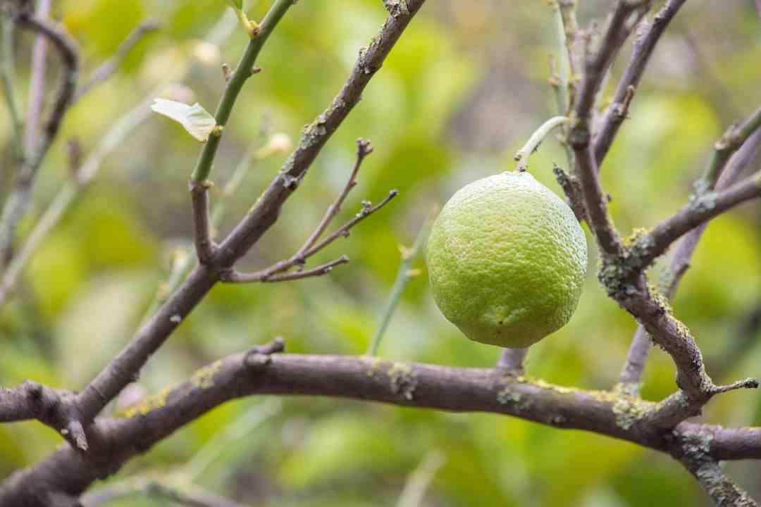 Comment faire de l'électricité avec des fruits ?