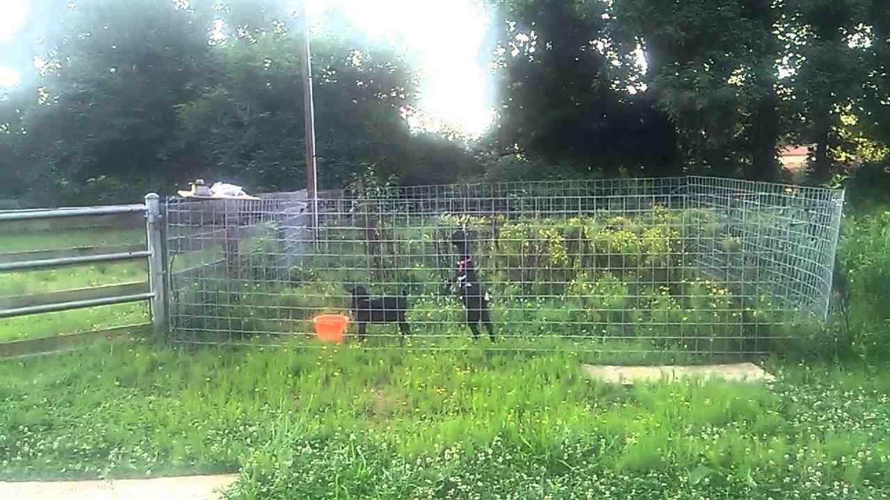 Pourquoi la clôture électrique ne fonctionne pas ?